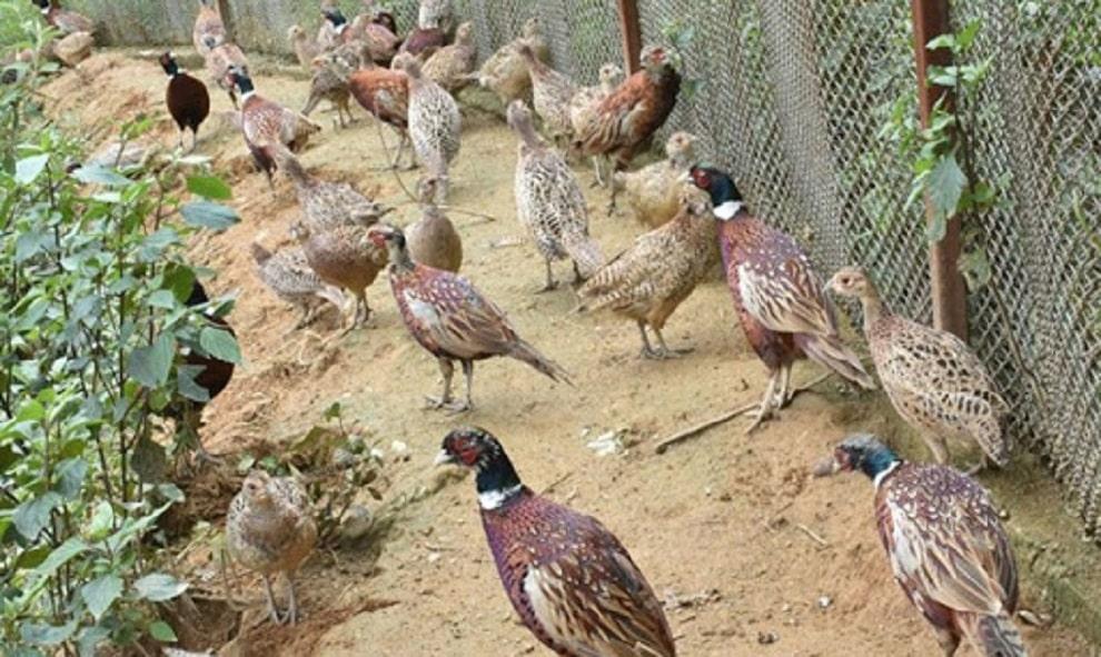 डोटीको धिर्कामाण्डौँमा व्यावसायिक कालिजपालन शुरु image