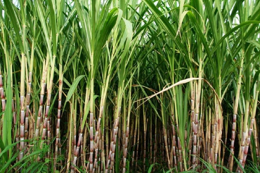 तोकिएको मूल्य पाउँदा किसान खुशी image