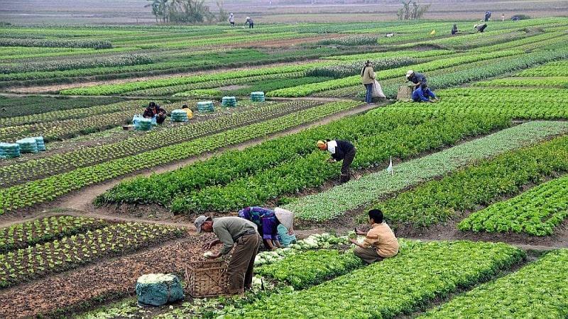 कृषिमा फड्को मार्दै झापाको कनकाई नगरपालिका image