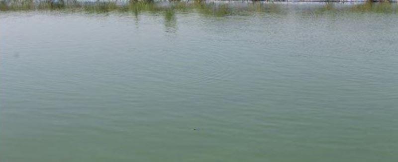 ११ पोखरीको पुनःनिर्माणसहित पानी भरियो image